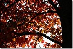 automne9