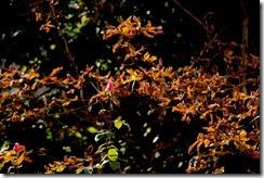 automneville